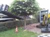 renovatie-tuin-9